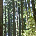 Discovering Wildlife in the East Bay Redwoods